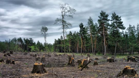 Как борьба за лес превратилась в борьбу за город