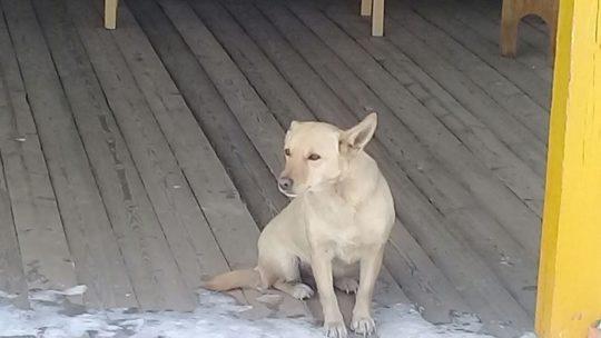 Из-за бродячих собак сотрудники детского сада в Братске не водят на прогулку детей уже 2 недели